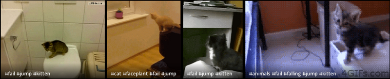 Kitten Jump Fail GIFs on Giphy